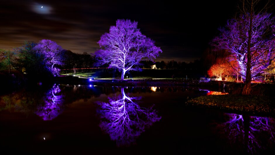 Glow illuminations at RHS Garden Harlow Carr.