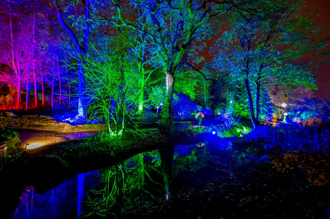 Harlow Carr Glow @RHS by Charlotte Graham photography crop[4415].jpg